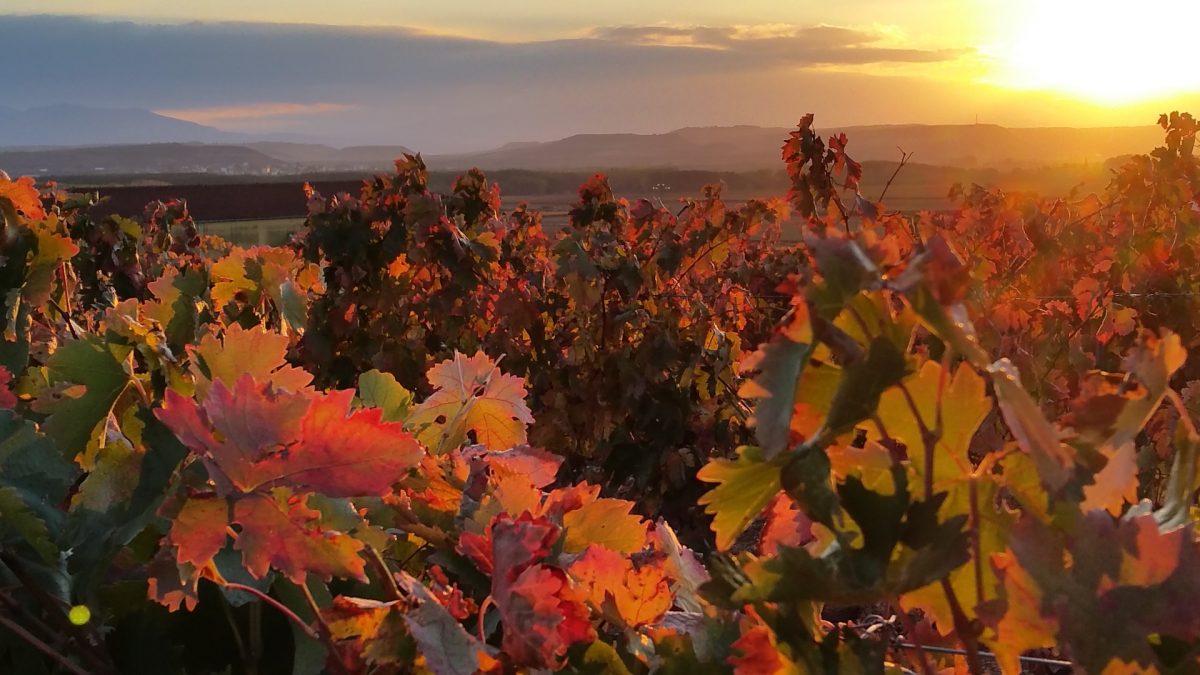 Ceniceros anuncia en Haro un plan para la protección del paisaje y del viñedo de La Rioja 1