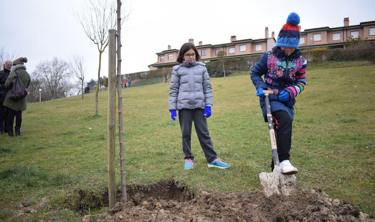 Las imágenes de la plantación de árboles donados por Muebles Guerra 1