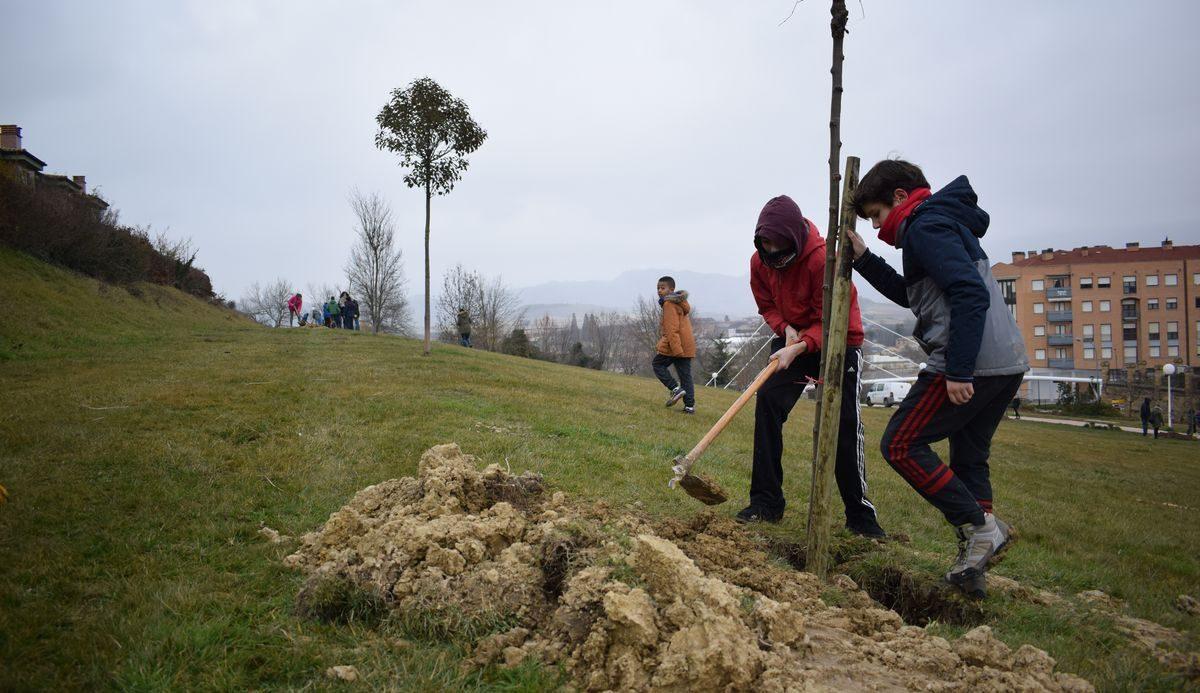 Las imágenes de la plantación de árboles donados por Muebles Guerra 10