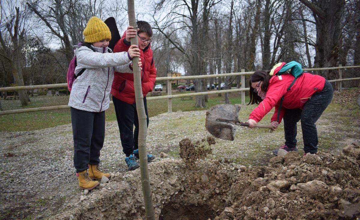 Las imágenes de la plantación de árboles donados por Muebles Guerra 6