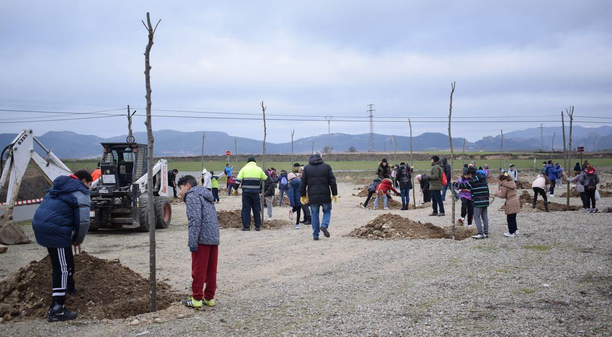 Las imágenes de la plantación de árboles donados por Muebles Guerra 7