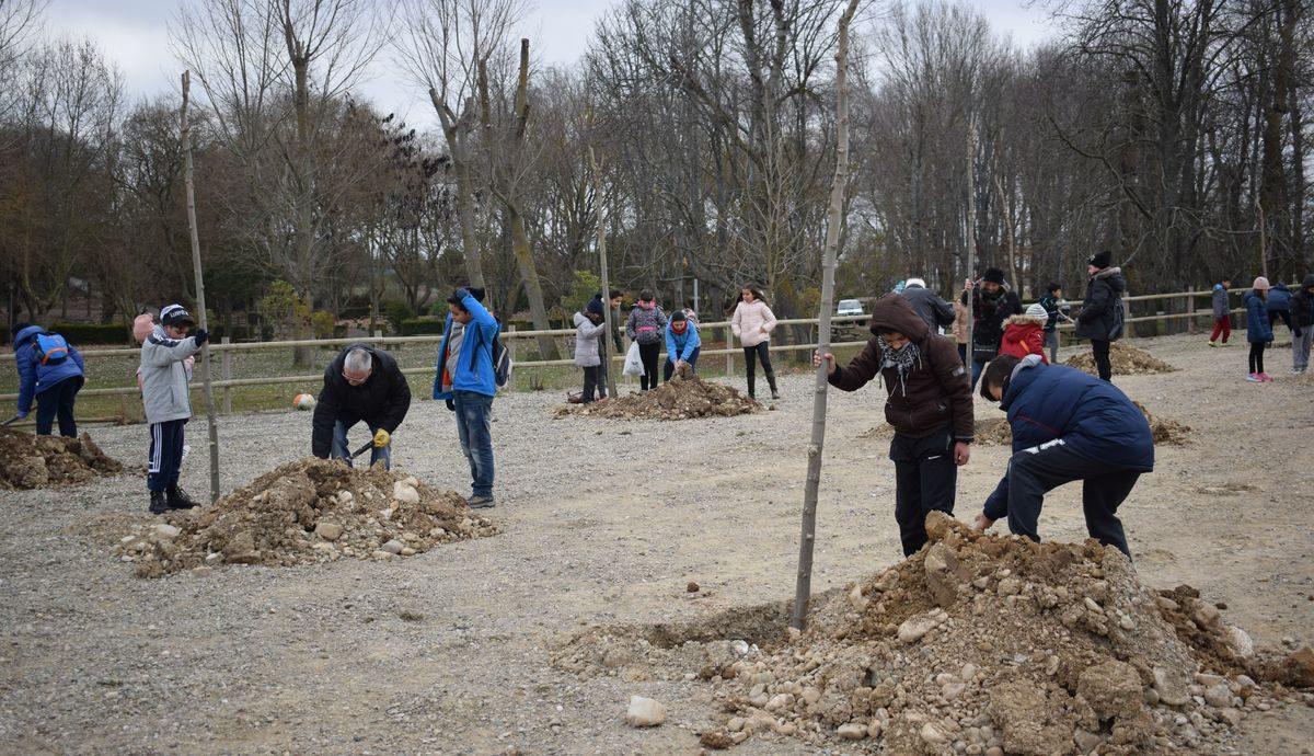 Las imágenes de la plantación de árboles donados por Muebles Guerra 8