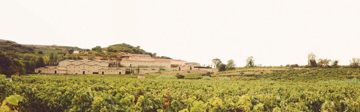 'La sensibilidad femenina aporta un valor añadido a la elaboración del vino' 1