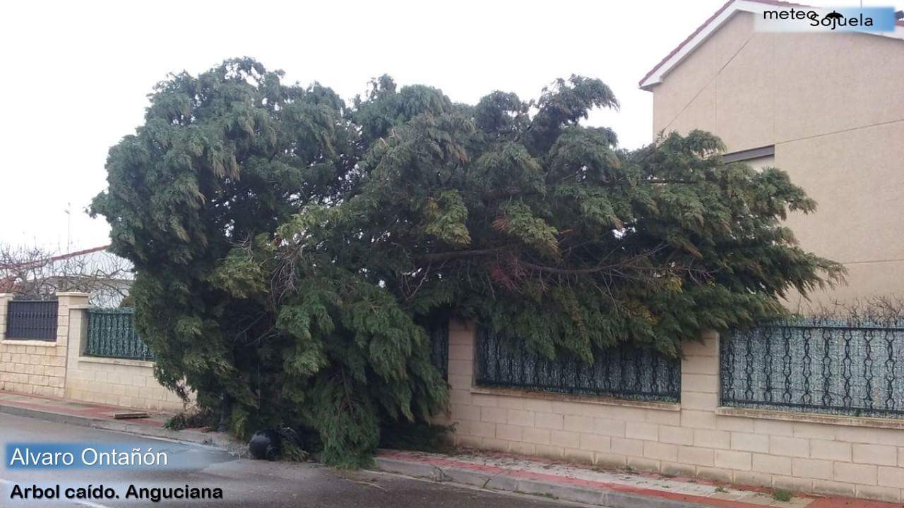 Los destrozos que ha dejado el temporal de viento 1