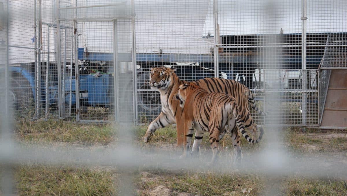 Los argumentos de la propuesta para que no se autoricen las actuaciones de circos con animales salvajes en Haro 2