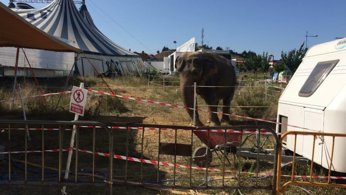 Una petición en Change.org exige la prohibición de la actuación del Circo Coliseo en Haro 3