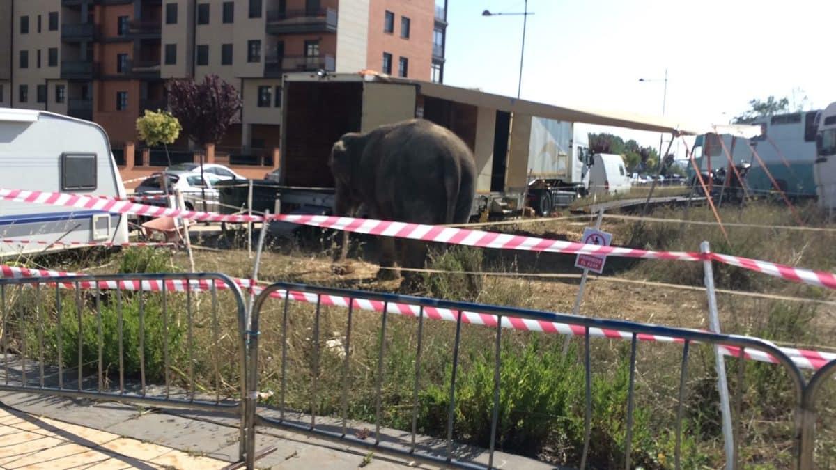 Una petición en Change.org exige la prohibición de la actuación del Circo Coliseo en Haro 2