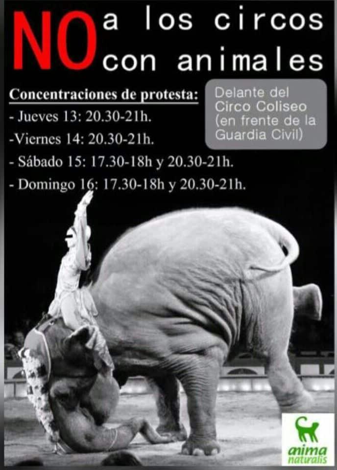 Una petición en Change.org exige la prohibición de la actuación del Circo Coliseo en Haro 1