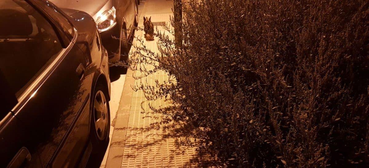 Denuncian el estado de dejadez del solar de la calle Basilio Miranda 3