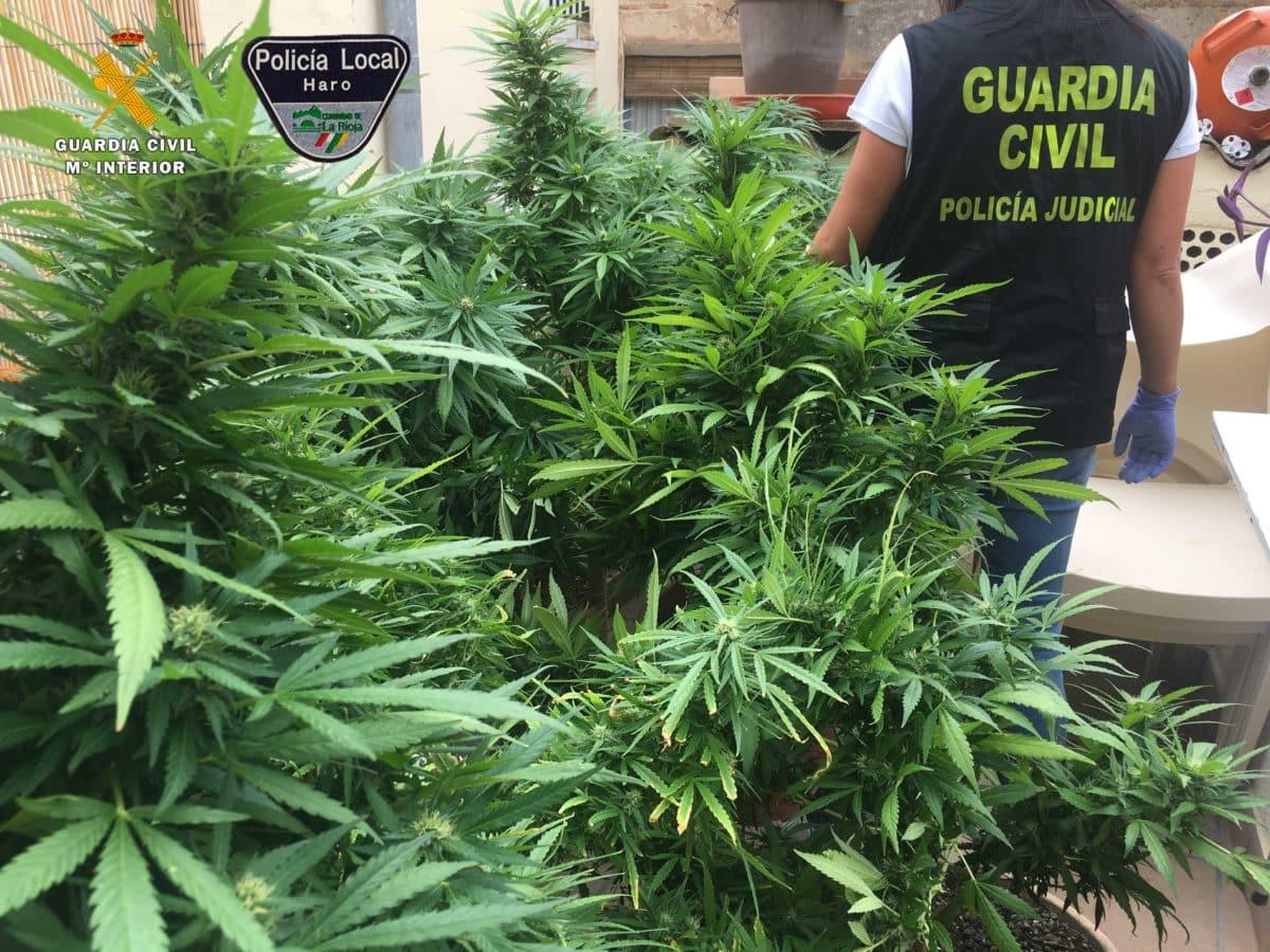 Guardia Civil y Policía Local desmantelan en Haro un nuevo punto de venta de sustancias estupefacientes 6