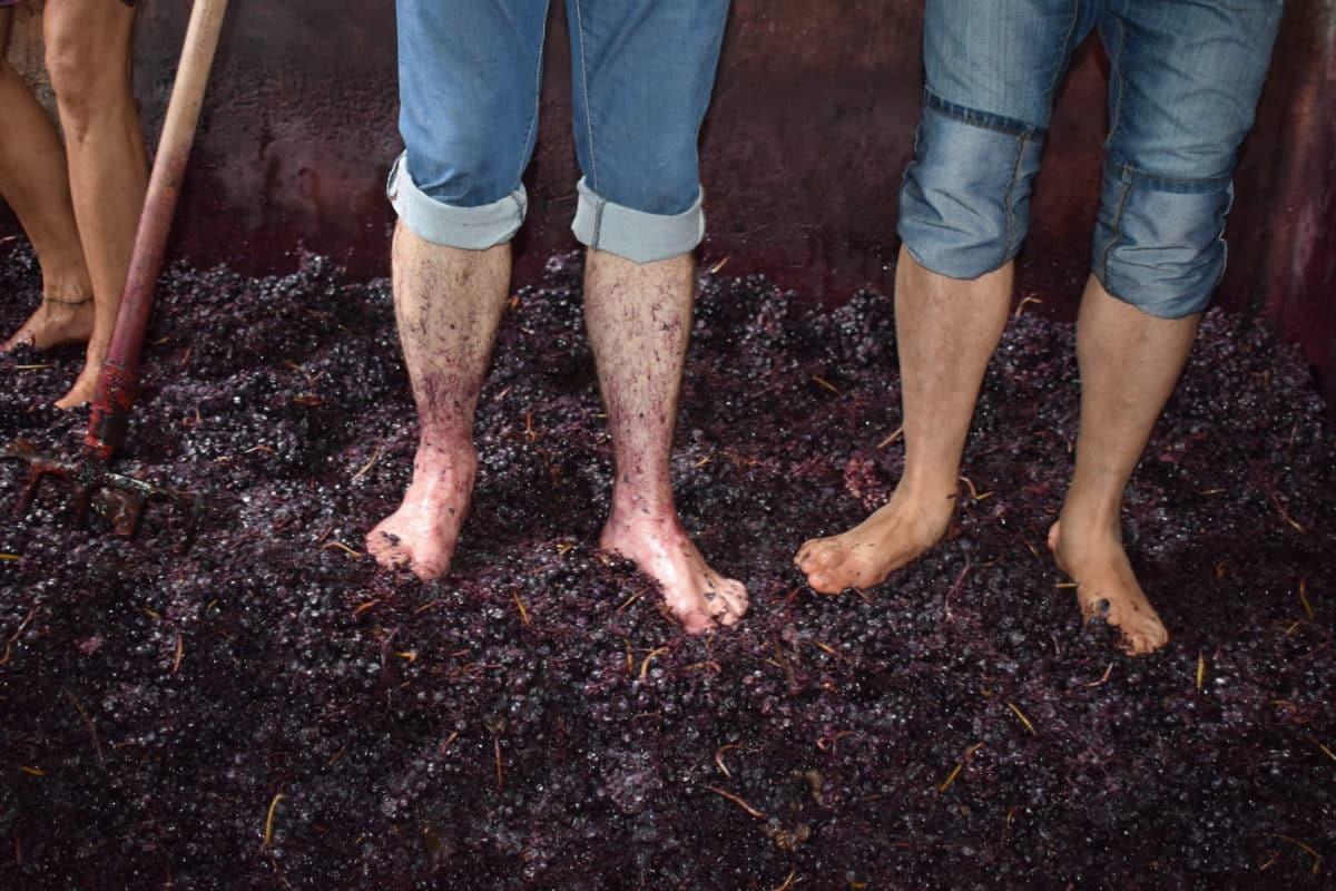 La fiesta del pisado de la uva de Bodegas Lecea 14
