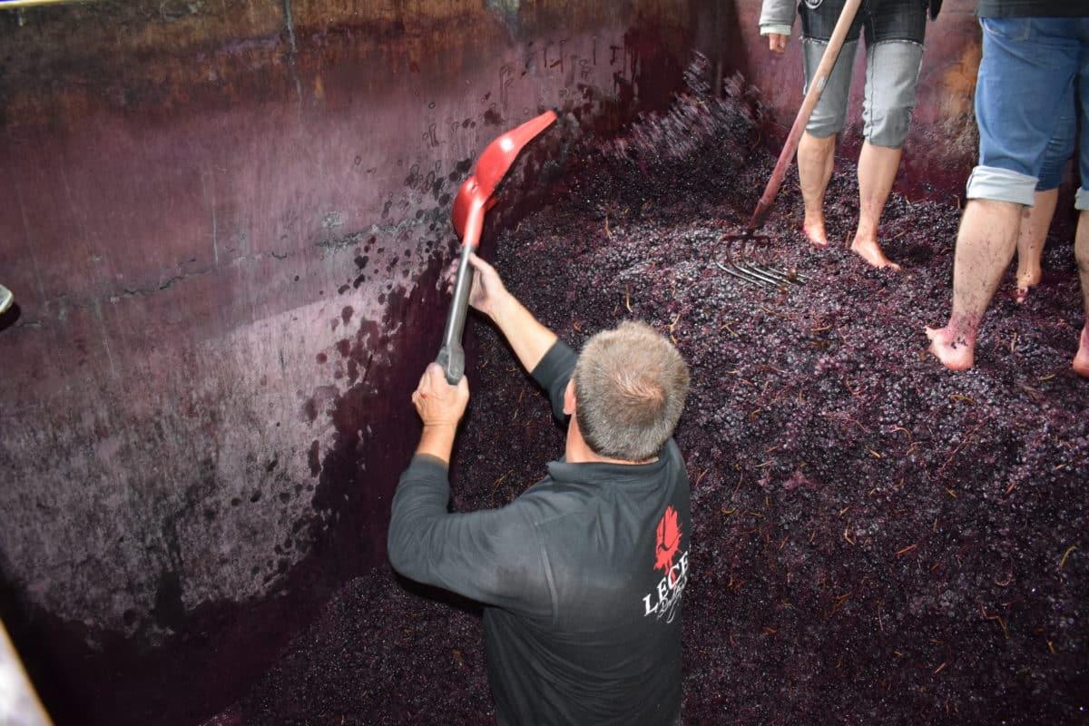 El tradicional pisado de la uva de Bodegas Lecea se reinventa por la pandemia 1