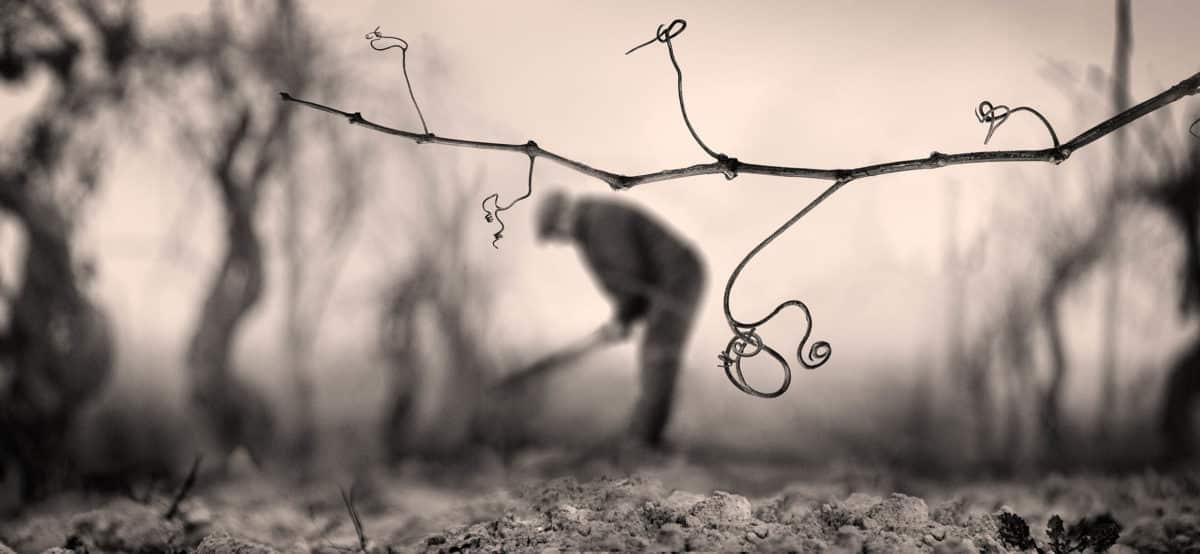 Víctor Manuel Ausín, ganador del XIX Concurso de Fotografía del Rioja y los 5 Sentidos 3