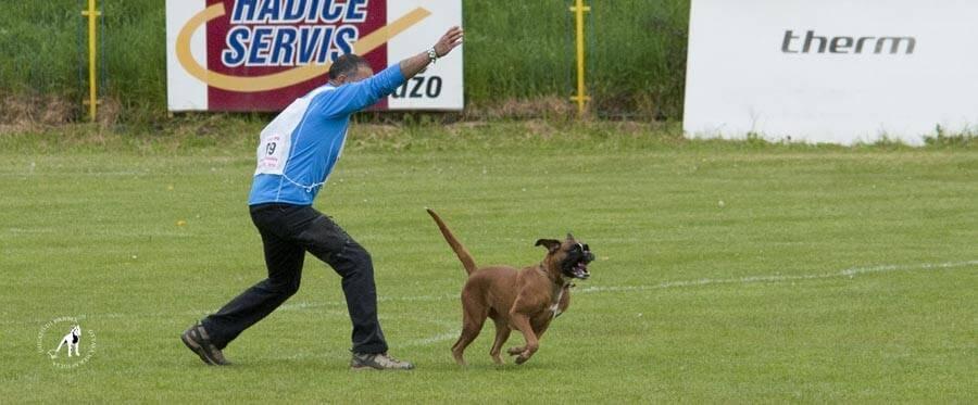 El Mazo coronará este fin de semana al mejor perro bóxer del mundo 1