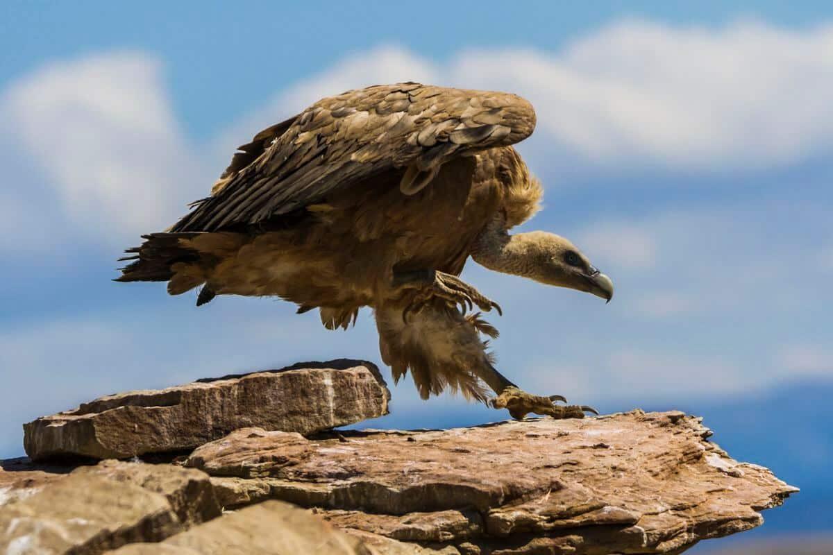La espectacular imagen de un águila real, ganadora del XI Concurso Fotográfico de Medio Ambiente de La Rioja 17
