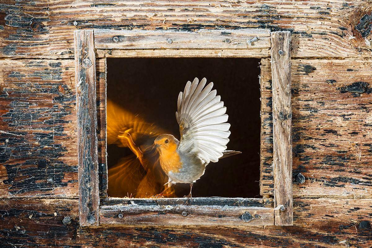 La espectacular imagen de un águila real, ganadora del XI Concurso Fotográfico de Medio Ambiente de La Rioja 23