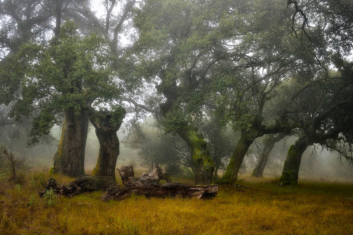 La espectacular imagen de un águila real, ganadora del XI Concurso Fotográfico de Medio Ambiente de La Rioja 1