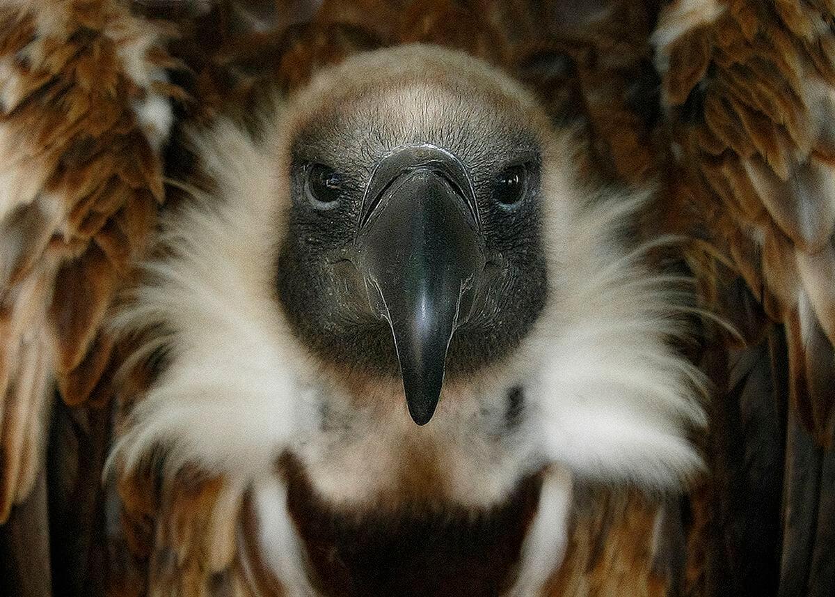 La espectacular imagen de un águila real, ganadora del XI Concurso Fotográfico de Medio Ambiente de La Rioja 9