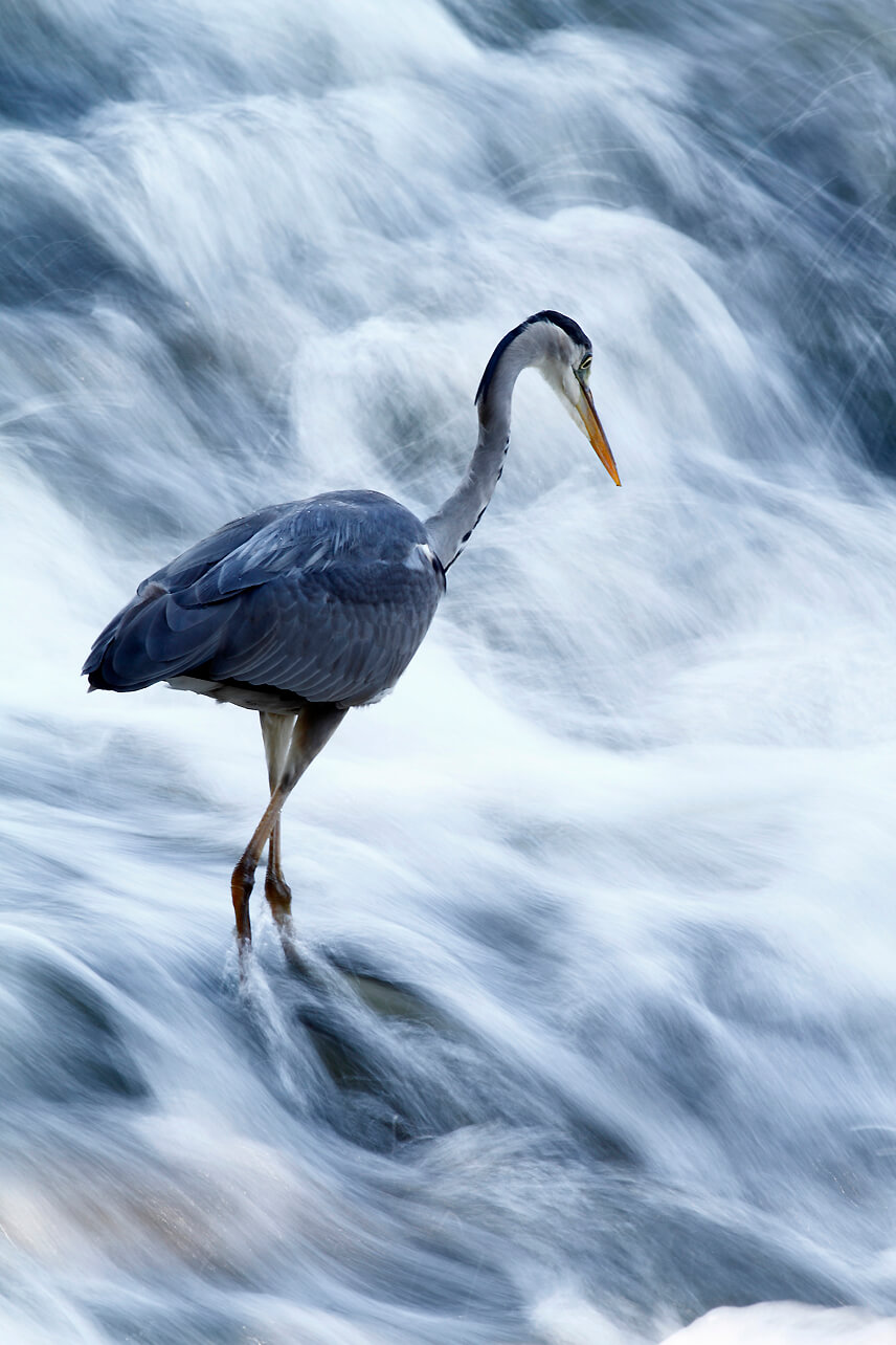 La espectacular imagen de un águila real, ganadora del XI Concurso Fotográfico de Medio Ambiente de La Rioja 5
