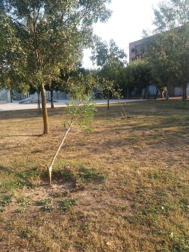 El Ayuntamiento de Nájera denuncia actos vandálicos contra los árboles plantados por Barpimo 1