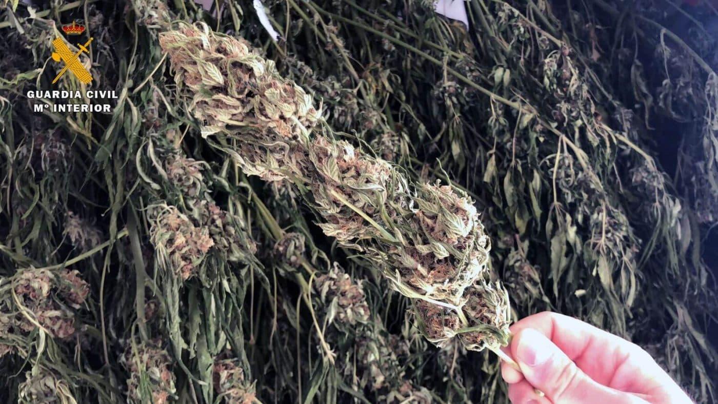 La Guardia Civil detiene a un vecino de Nájera que secaba marihuana en una vivienda de Anguiano 1