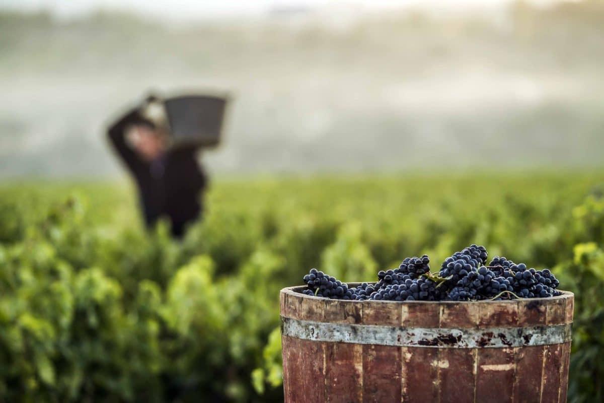 Haro es ciudad europea del vino, debe serlo por derecho propio 1