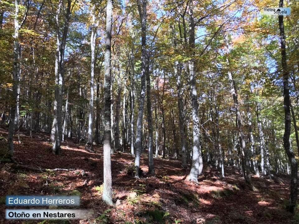 El otoño se instala en La Rioja Alta con temperaturas altas para esta época 4