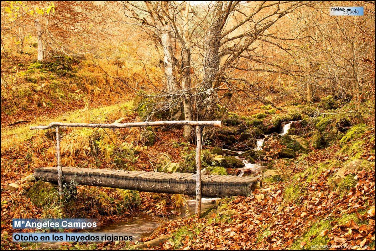 Estampas del otoño en La Rioja Alta: continúa el tiempo estable 5