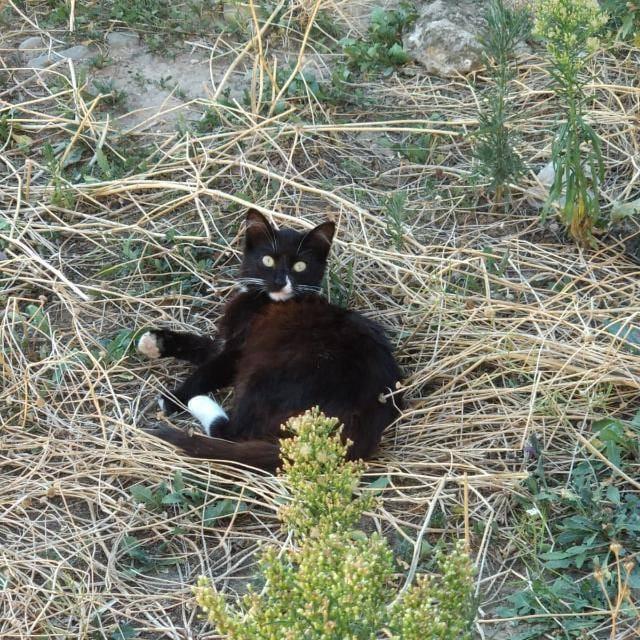 Hallan al menos seis gatos envenenados en Haro 3