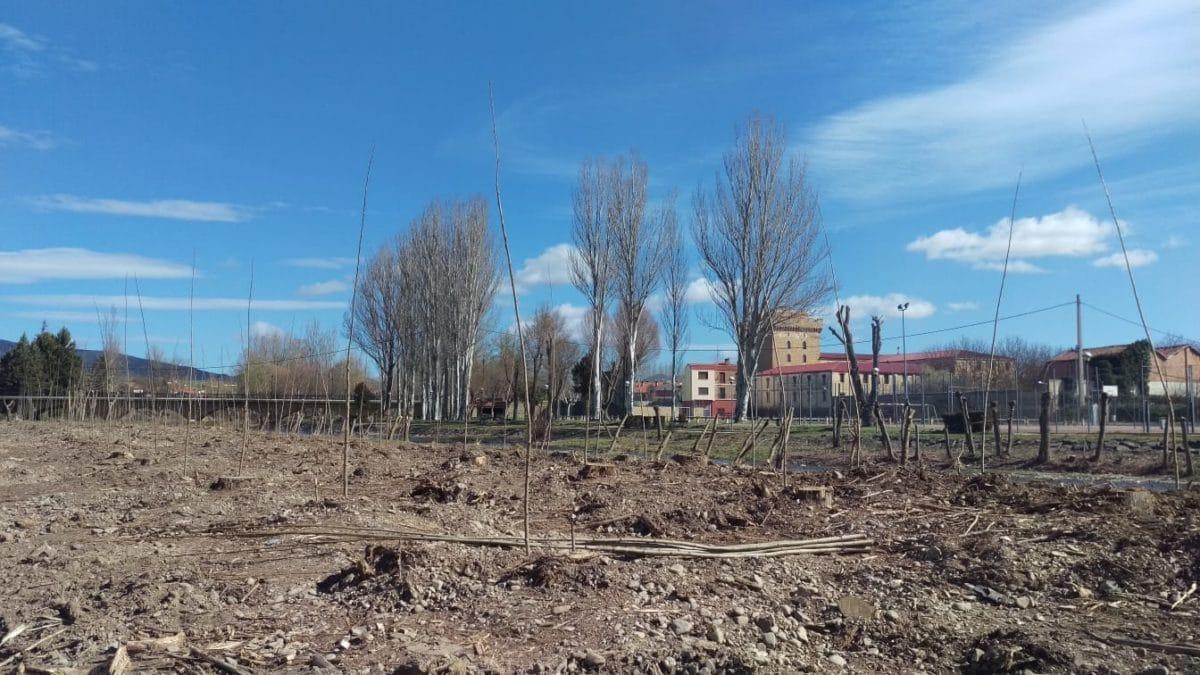 Anguciana planta 2.000 árboles para repoblar la chopera del Tirón 2