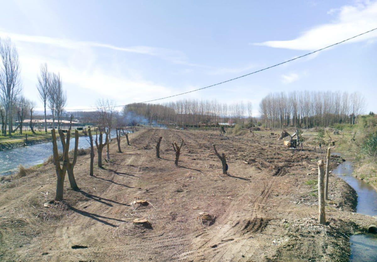 Anguciana planta 2.000 árboles para repoblar la chopera del Tirón 3