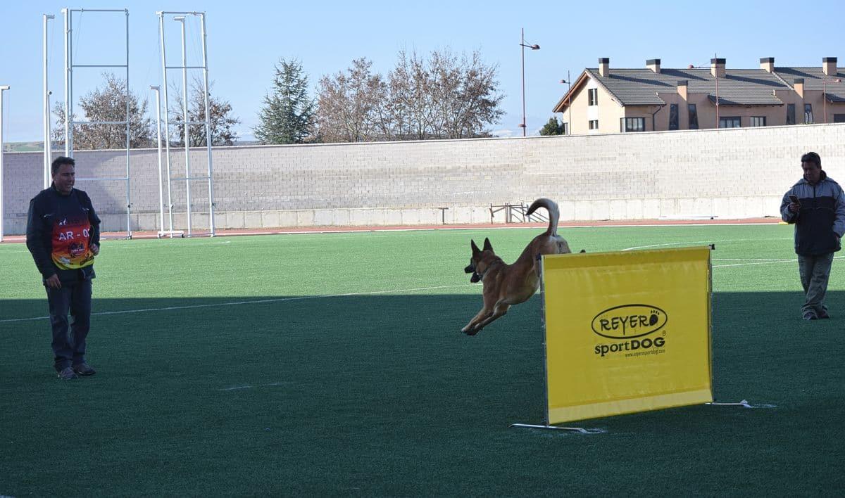 Arranca este sábado en Haro la XXIV Copa de España de Perros de Trabajo y Utilidad 1