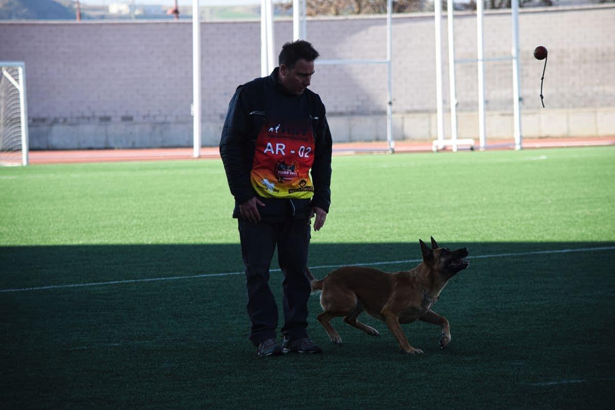 Arranca este sábado en Haro la XXIV Copa de España de Perros de Trabajo y Utilidad 3