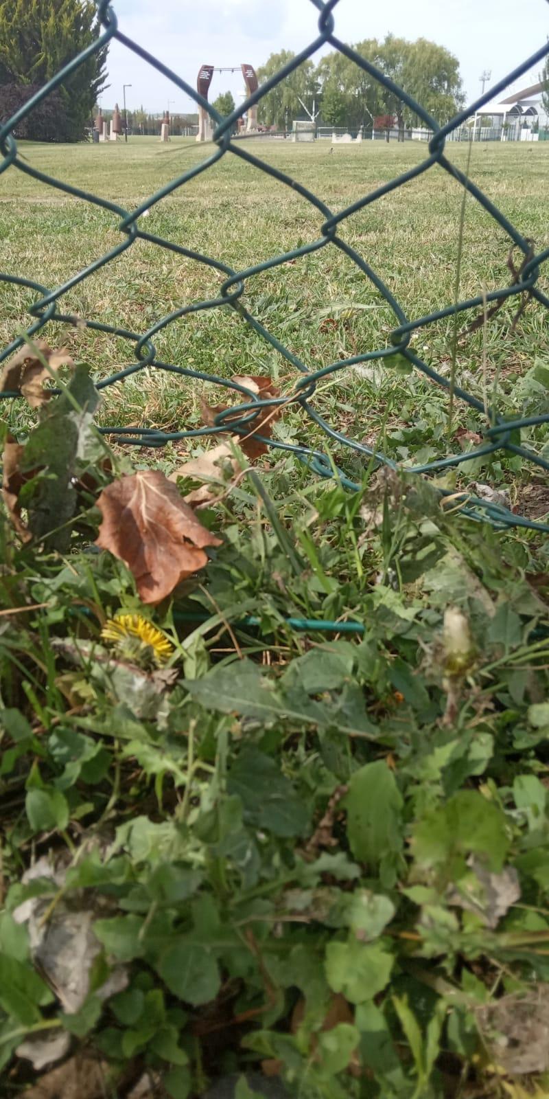 """Usuarios denuncian """"el abandono y deterioro"""" de la zona de esparcimiento canino de Haro 6"""