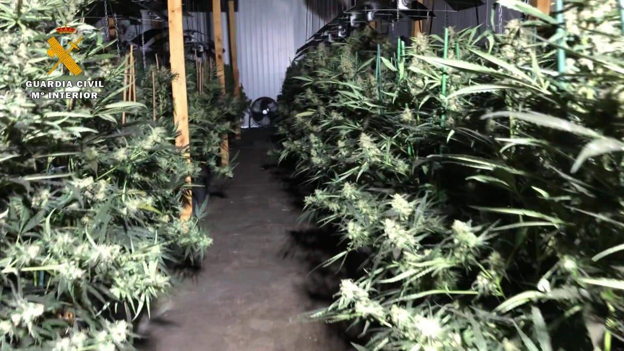 Desmantelado en Haro el mayor laboratorio 'indoor' de marihuana de La Rioja 1