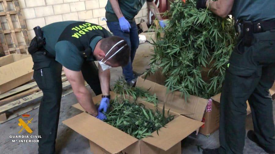 Desmantelado en Haro el mayor laboratorio 'indoor' de marihuana de La Rioja 7