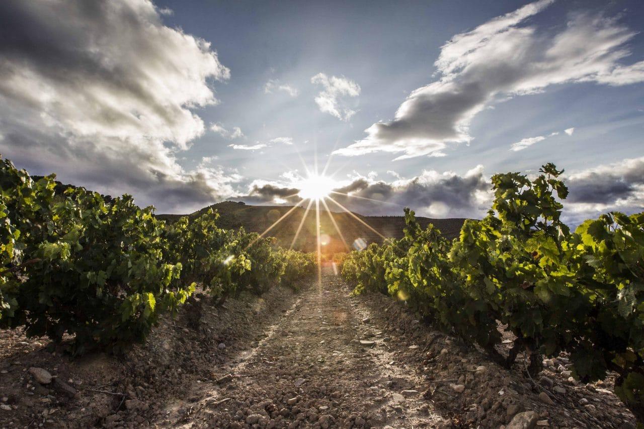 La Rioja destinará 58 millones de euros para impulsar la rentabilidad, competitividad y sostenibilidad del sector agrario y el medio rural 3