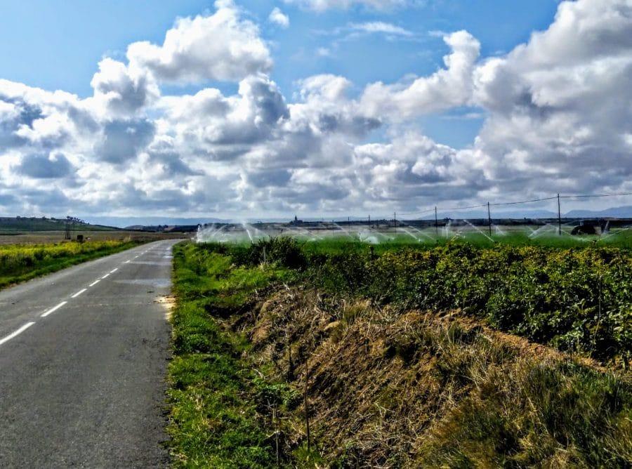Caminando entre viñedos hasta Zarratón 13
