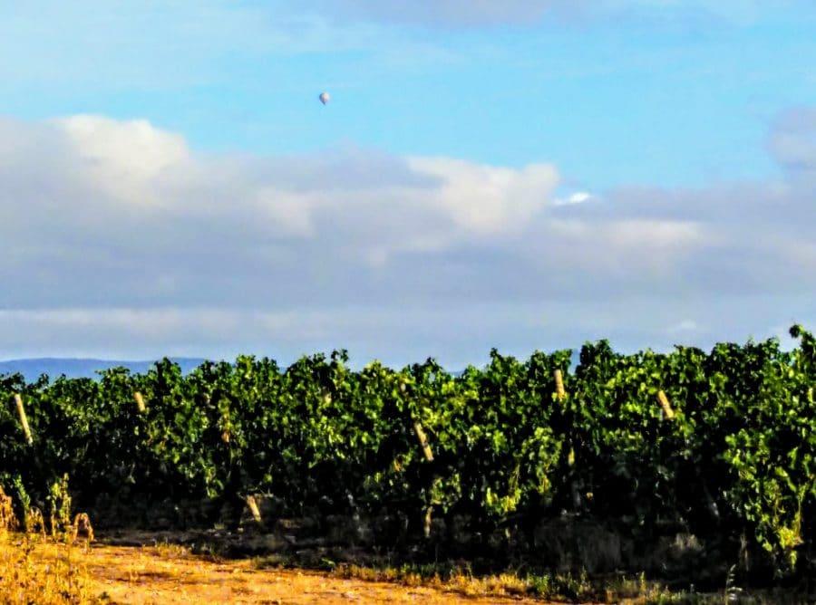 Caminando entre viñedos hasta Zarratón 6