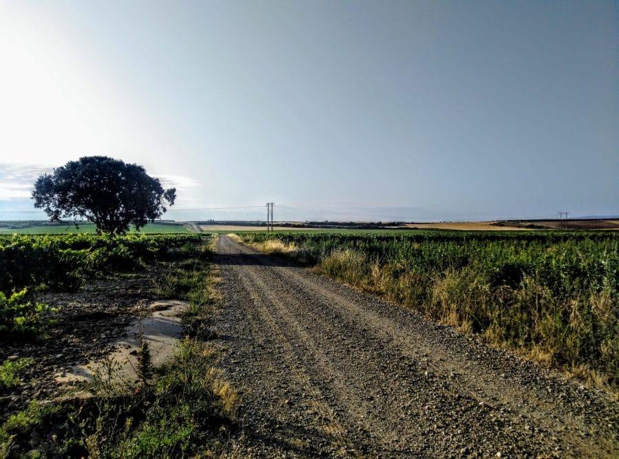 Caminando entre viñedos hasta Zarratón 8