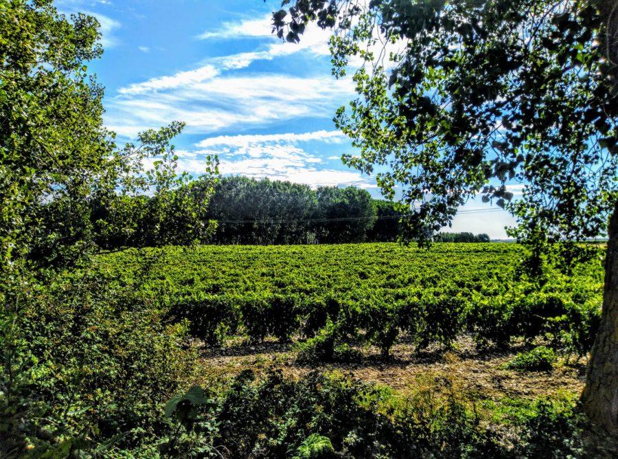 Caminos abiertos en La Rioja Alta 13