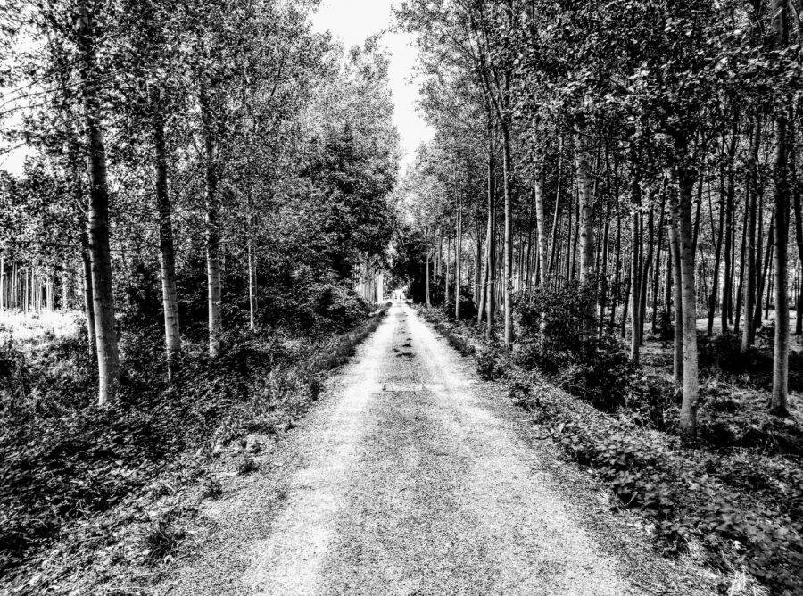 Caminos abiertos en La Rioja Alta 14