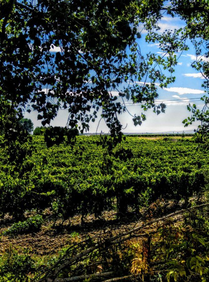 Caminos abiertos en La Rioja Alta 5