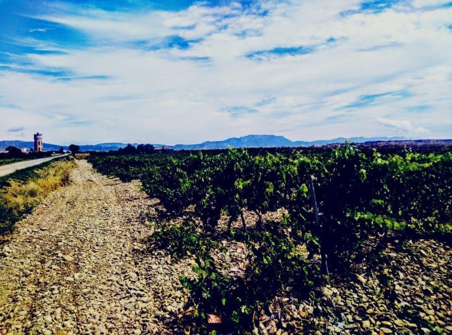 Caminos abiertos en La Rioja Alta 20