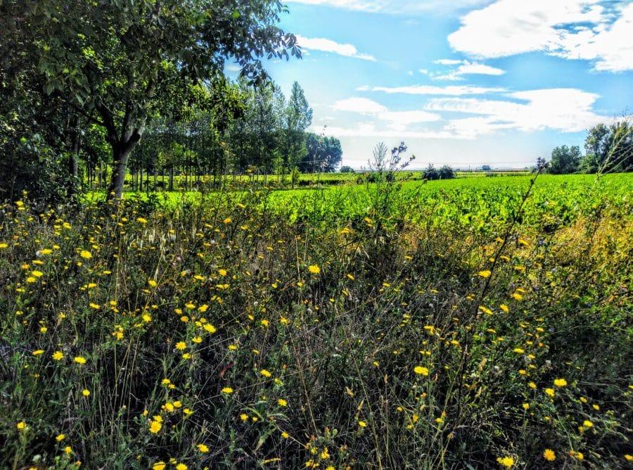Caminos abiertos en La Rioja Alta 12