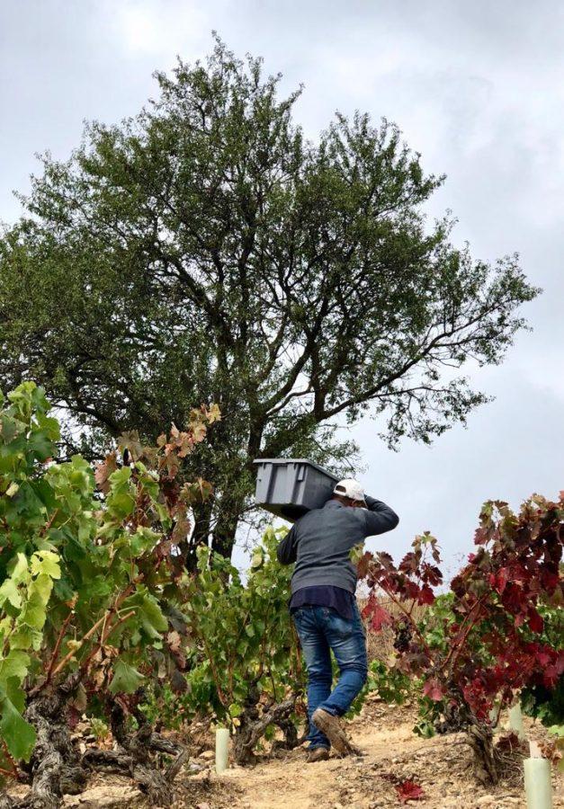 Una cosecha para grandes vinos 1