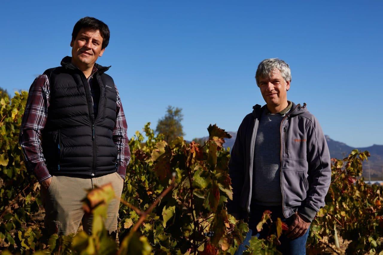 Una cosecha para grandes vinos 3
