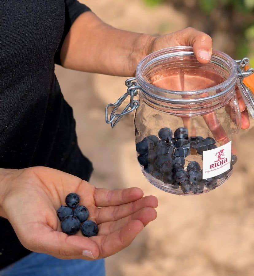 """El estado del viñedo de Rioja es """"óptimo"""" 1"""