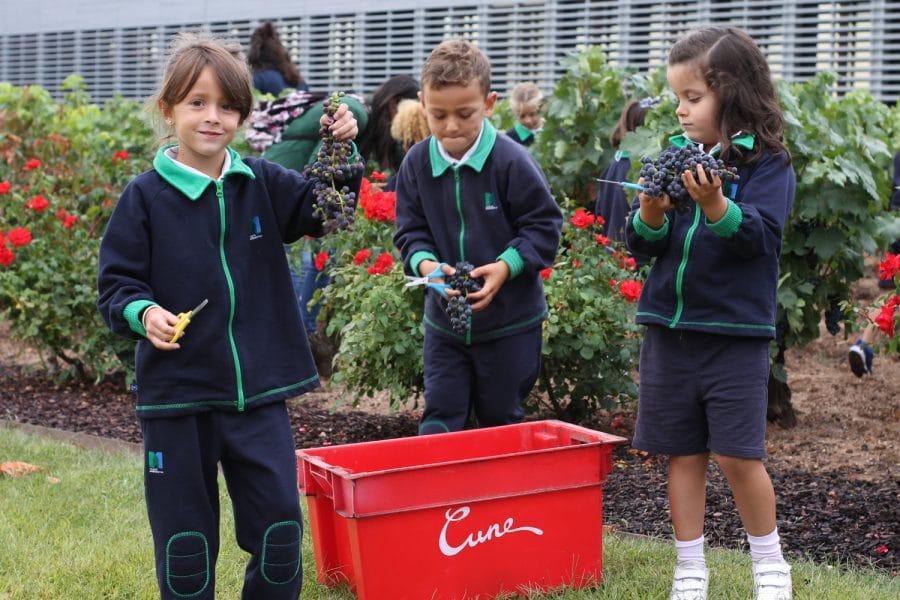 Un centenar de escolares disfrutan del comienzo de la vendimia en Viña Real 3