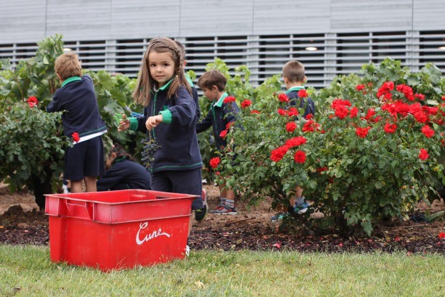 Un centenar de escolares disfrutan del comienzo de la vendimia en Viña Real 2
